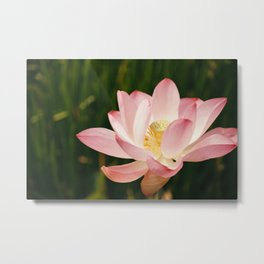 Radiant Lotus Metal Print