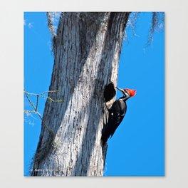 Bayou Bird (Pileated Woodpecker) Canvas Print