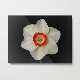 Daffodil 'Dena' Metal Print