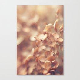 Soft Peach Canvas Print
