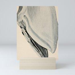 W Sidney Berridge - A Book of Whales (1900) - Figure 17: Embryo of a Blue Whale Mini Art Print
