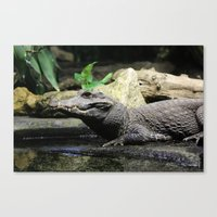 crocodile Canvas Prints featuring Crocodile by Falko Follert Art-FF77