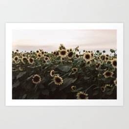 In The Sunflower Field Art Print
