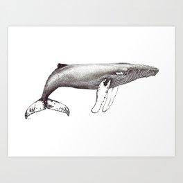 Humpback whale black and white ink ocean decor Art Print
