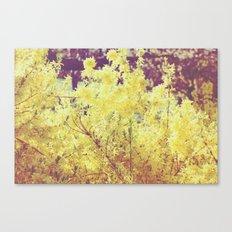 yellow flower - Forsythia Canvas Print