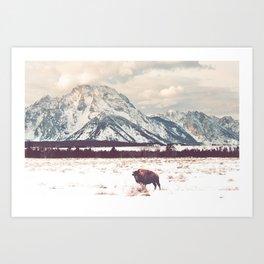 Bison & Tetons Art Print
