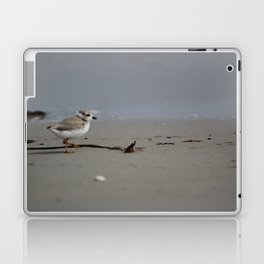 Piping Plover Chick Laptop & iPad Skin