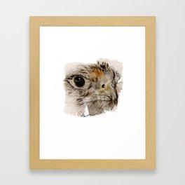 Hawk Framed Art Print