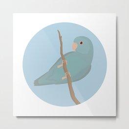 Blue Fallow Pacific Parrotlet Metal Print