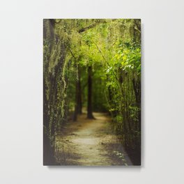 Louisiana Forest, Spanish Moss Metal Print