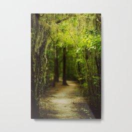 Louisiana Forest, Spanish Moss Metal Print