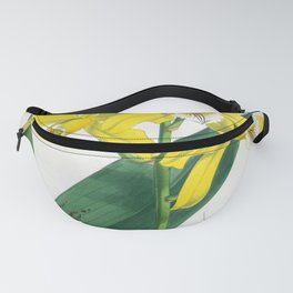 Laelia Xanthina Vintage Yellow Lindenia Orchid Fanny Pack