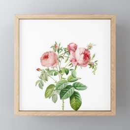 Vintage & Shabby Chic - English Roses Shrub Framed Mini Art Print