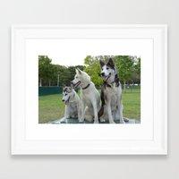 husky Framed Art Prints featuring Husky by Alexandra Forcier