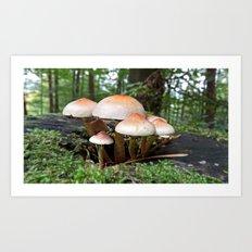MM - Mushrooms Art Print