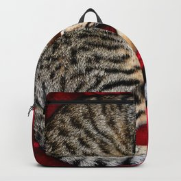 Cute Tabby Cat napping Backpack