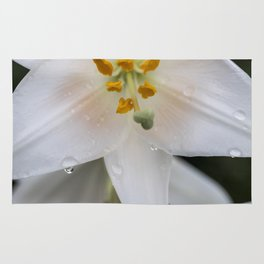 Raindrops on lily Rug