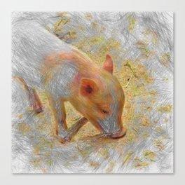 Artistic Animal Piglet Canvas Print