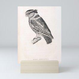 042 scops atricapilla1 Mini Art Print