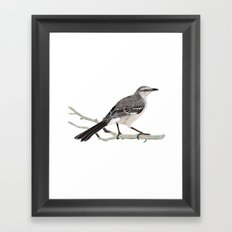 Northern mockingbird - Cenzontle - Mimus polyglottos Framed Art Print