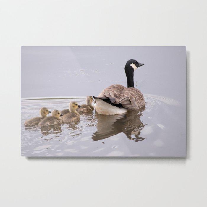 Swimming Lesson Metal Print