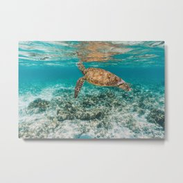 Turtle ii Metal Print