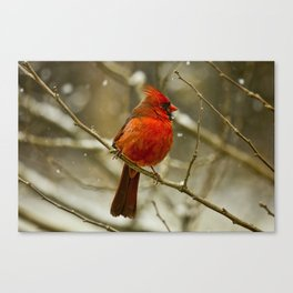Wintry Cardinal Canvas Print
