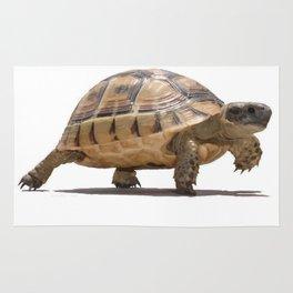 Marching Baby Tortoise Cartoon Vector Isolated Rug