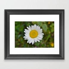 Daisy, Pure & Simple Framed Art Print