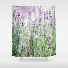 Lavender in summer garden Shower Curtain