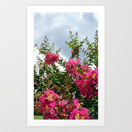 Common Crapemyrtle 1 Art Print