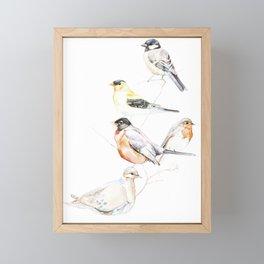 Birds of the Midwest Framed Mini Art Print