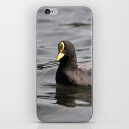 A curious coot iPhone Skin