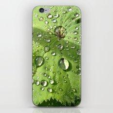 Alchemilla iPhone Skin