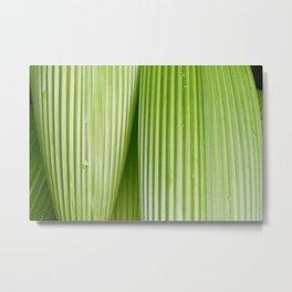 Costa Rican Foliage Metal Print