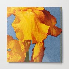 Spring Iris Metal Print