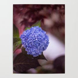 Flower Poof Poster
