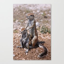 The Massage - Funny Squirrels wildlife in Africa Canvas Print