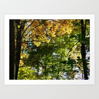 Sun Shined Leaves Art Print