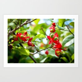 Rosy Red Flowers Art Print