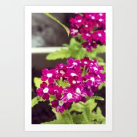 Pretty in Pink Florals Art Print