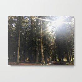 Sun Through Trees. Rushemere Country Park, Bedfordshire UK Metal Print