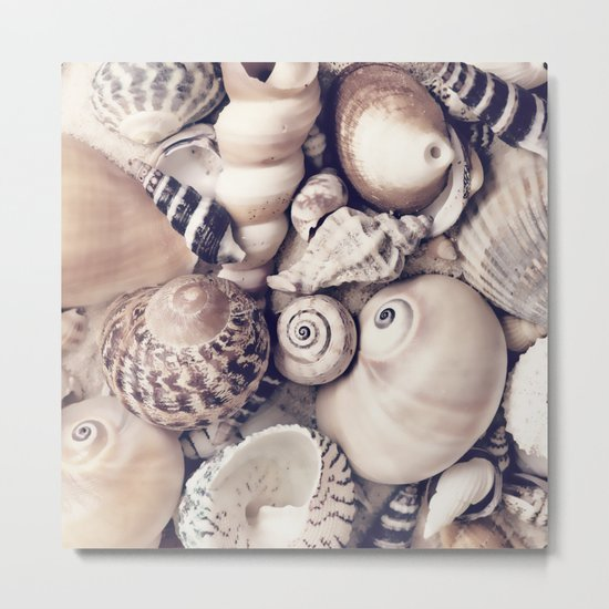 Vintage  Sea Shell Collection Coastal Style Metal Print