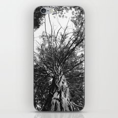 black and white forest iPhone & iPod Skin