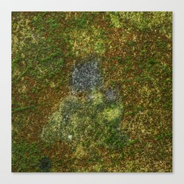 Old stone wall with moss Canvas Print