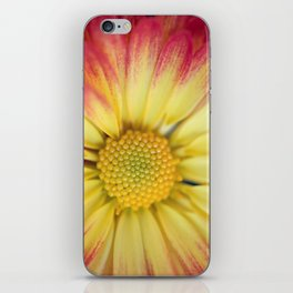 Orange and Yellow Mum iPhone Skin