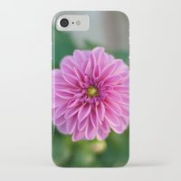 dahlia iPhone & iPod Cases featuring Dahlia by Katie Kirkland
