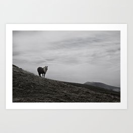 A Pony in the Pyrenees Art Print