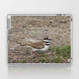 Concerned Killdeer Laptop & iPad Skin