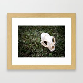 bobcat skull Framed Art Print
